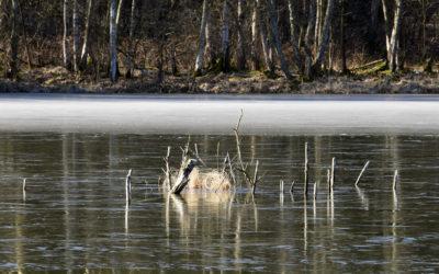 Der Kleine Lubowsee kurz nach dem Winter